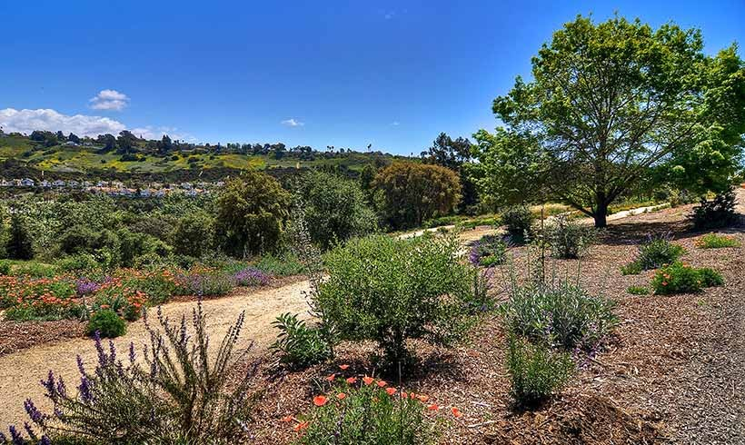 California Native Garden
