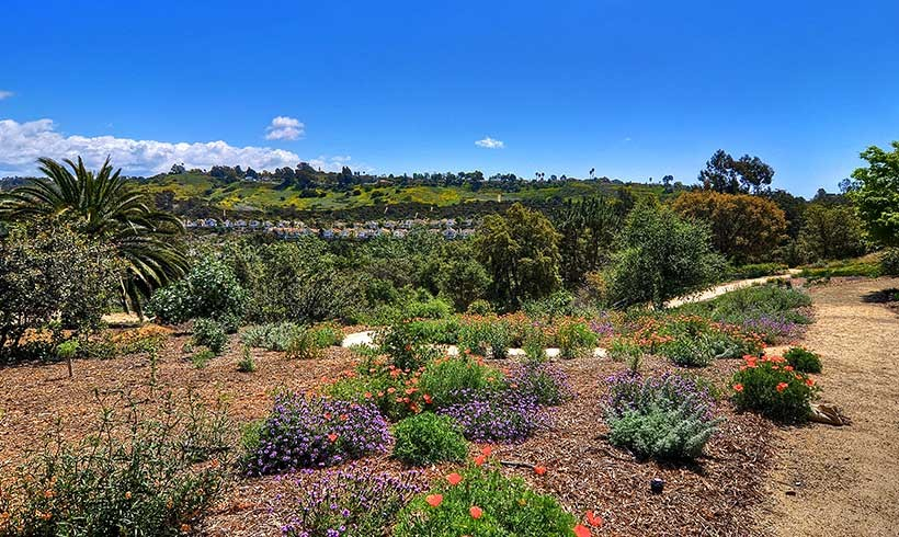 Upper California Native Garden